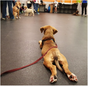 train your dog in a class